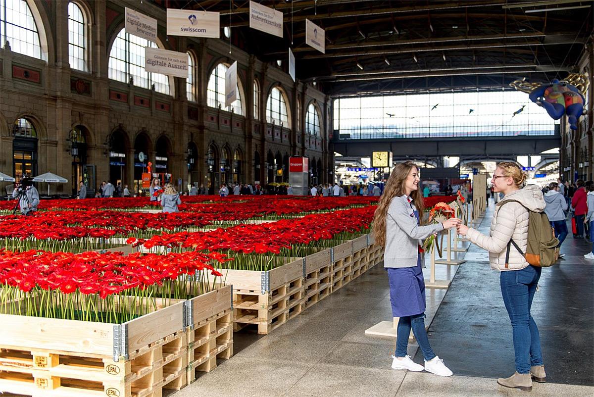 Internet mobile swisscom offre des fleurs et se contredit for Offre des fleurs