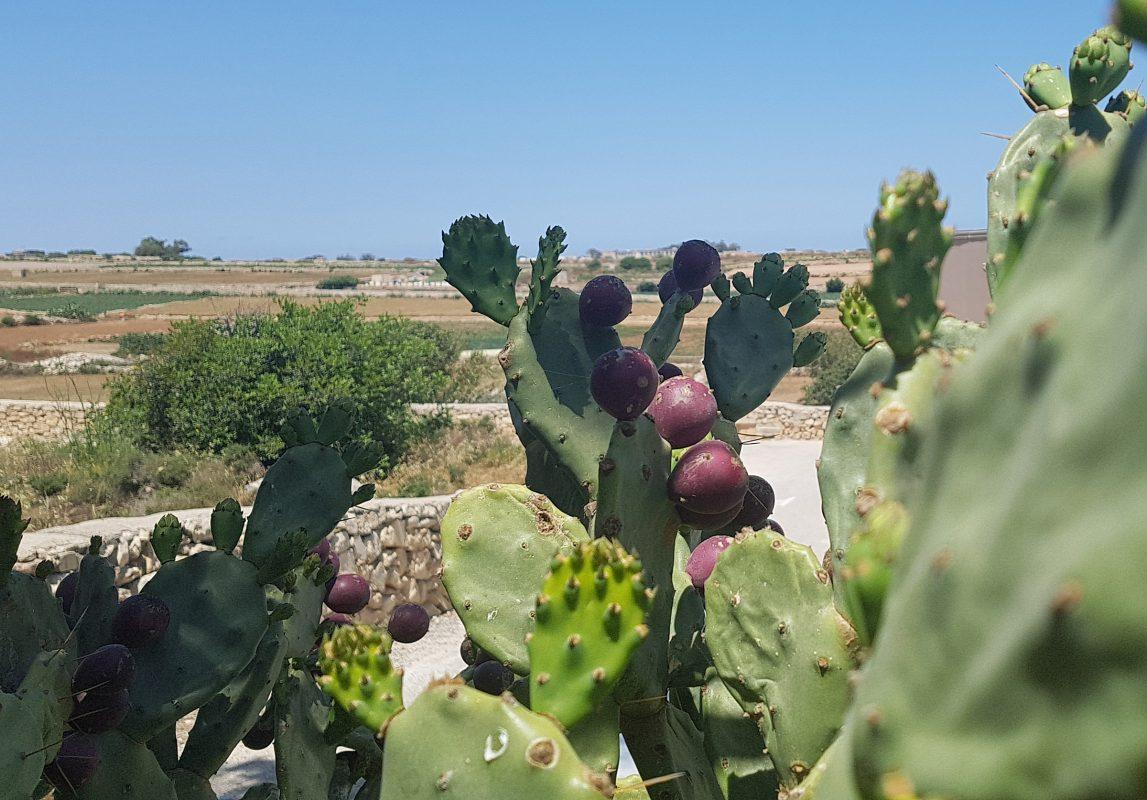Roaming: pour ne pas finir dans les cactus....